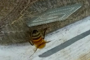 Bee curious